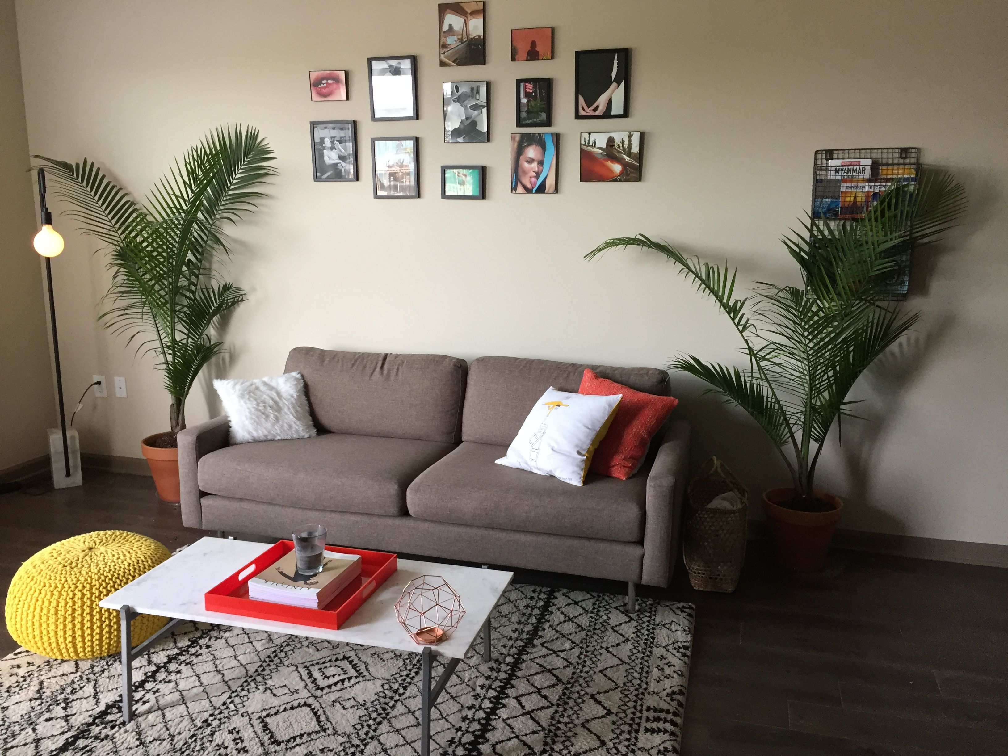 Cb2 Minimalist Colorful Tropical Plants Indoor Living Room Ideas Apartment Design And Decor Small