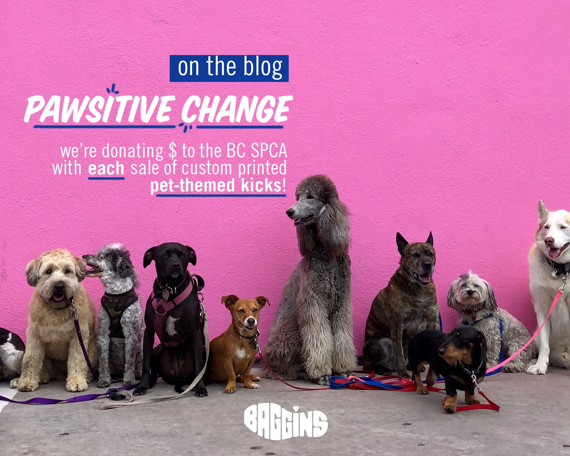 Pawsitive Change Spca Silly Dogs Dog Breeds Big Dogs