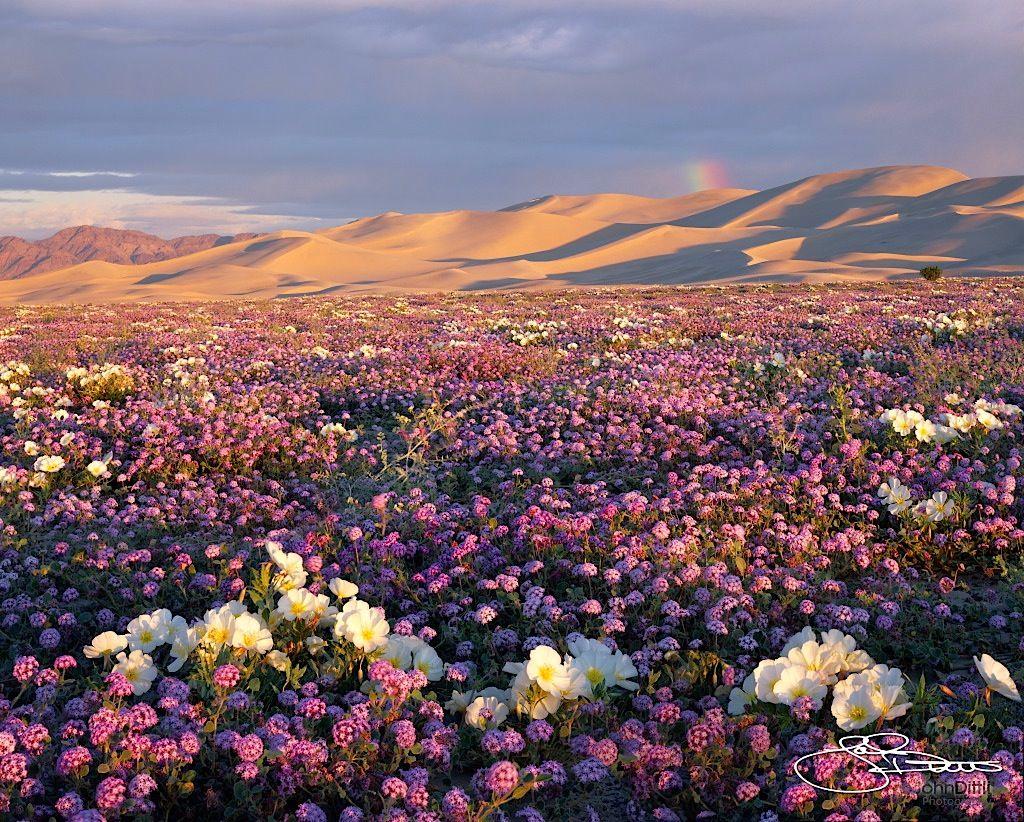 mojave desert in full bloom bucket list n american travel