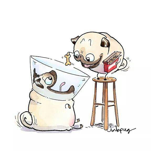 Mops füttert Mops mit Knochen (Zeichnung)