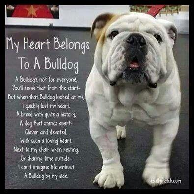 Heart Belongs To My Bulldog Bulldog Bulldog Puppies Bulldog Funny
