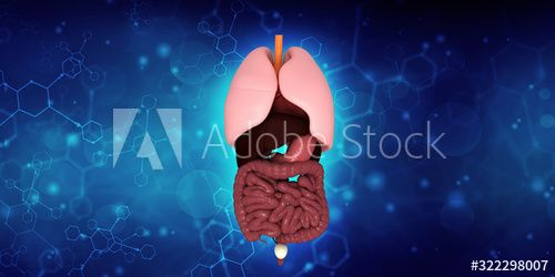 Healthy Human Lungs 3d illustration , #Sponsored, #Human, #Healthy, #illustration, #Lungs #Ad
