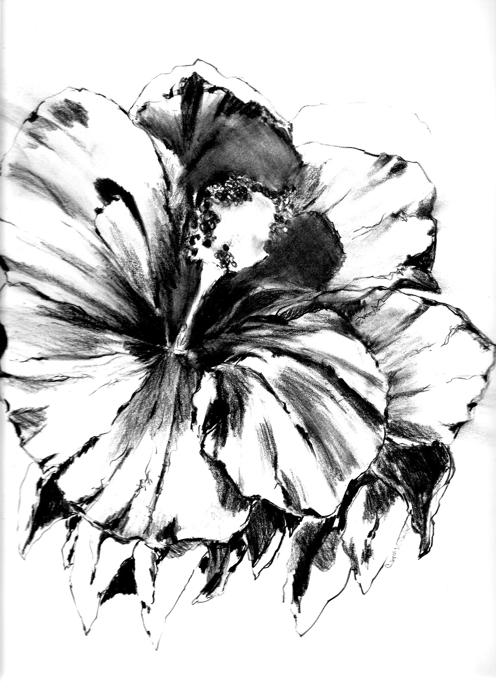 Hibiscus Flower Pencil Drawing Hibiscus Ii Tattoo Pinterest
