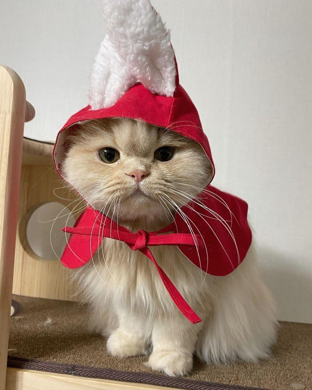 Amazing Stylish Cute Cat In 2020 Cute Cats Cute Cat Cat Day