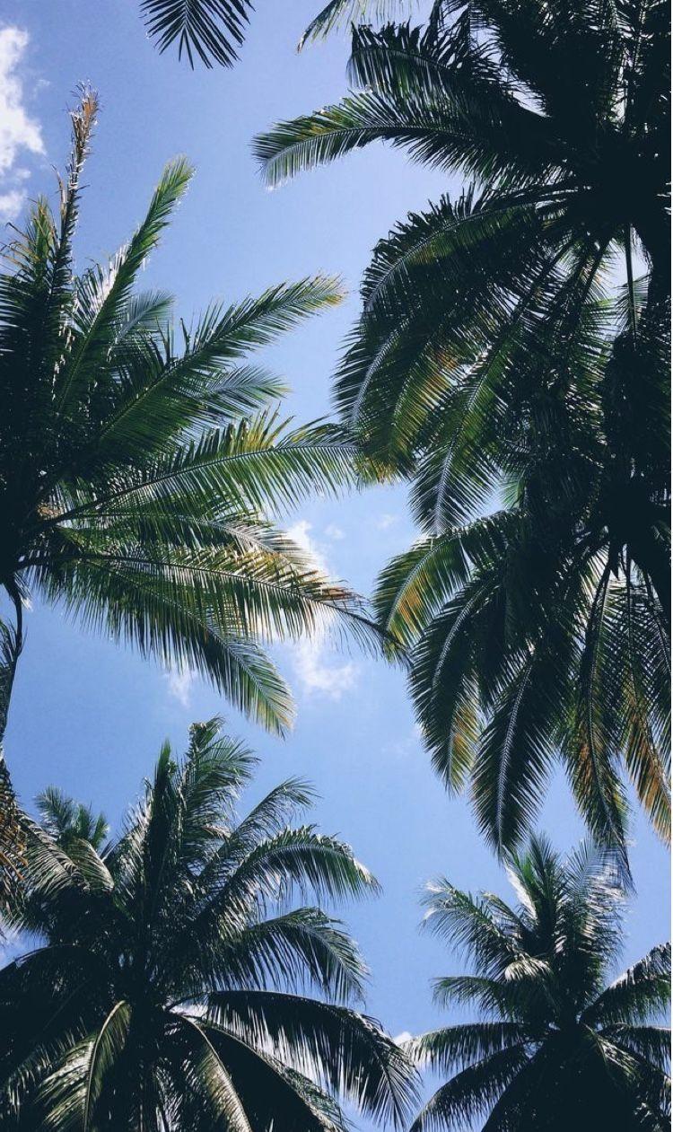 Ivory Cove Rentals - Palms of Destin