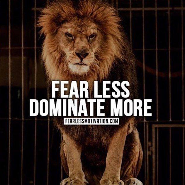 Motivational Quotes With Lion Images: Pin By Ed Zimbardi Www.EdZimbardi.com On Motivational