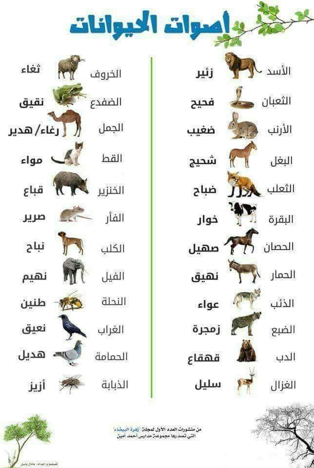 أصوات الحيوانات Arabic Language Learning Arabic Language History