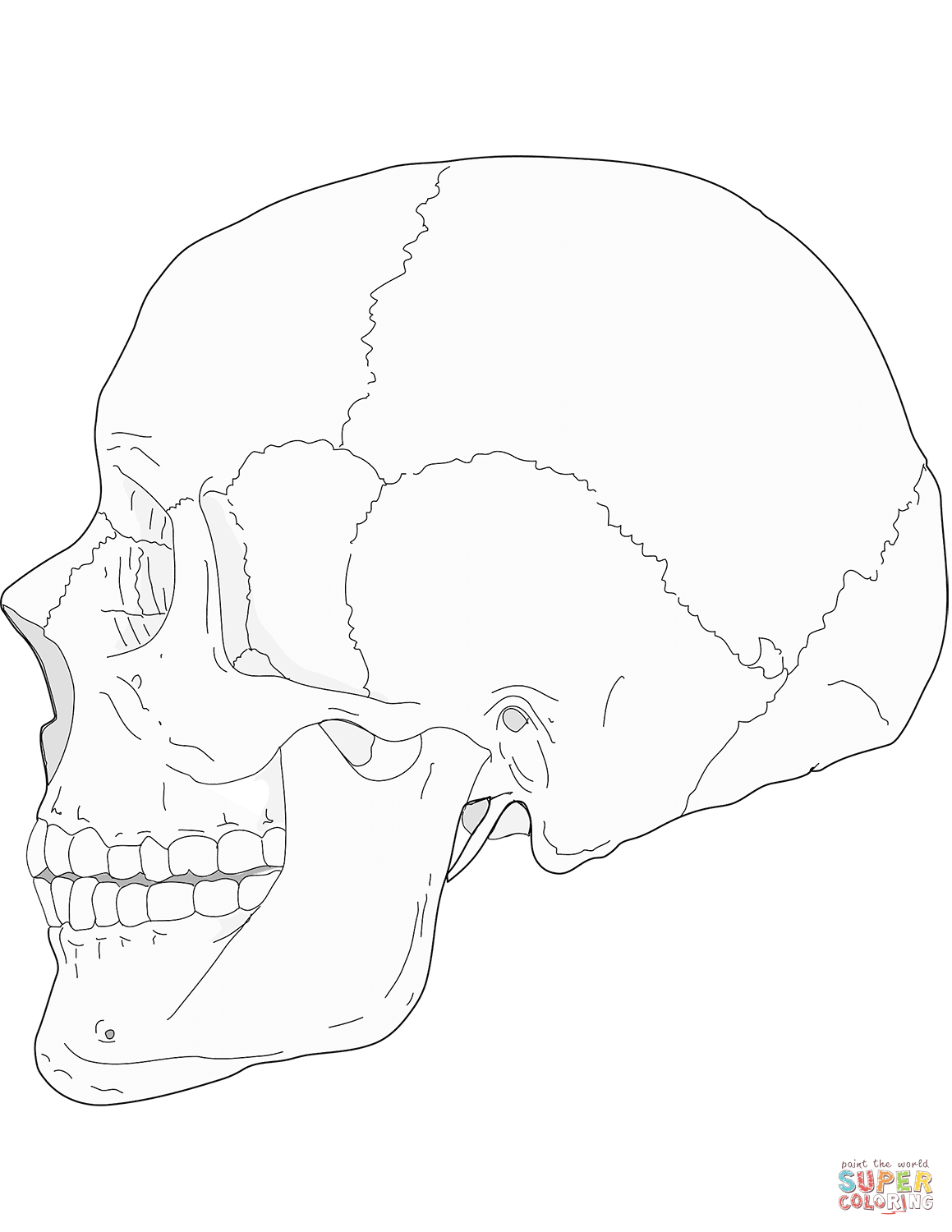 Human Skull Side View Coloring Page From Anatomy Category