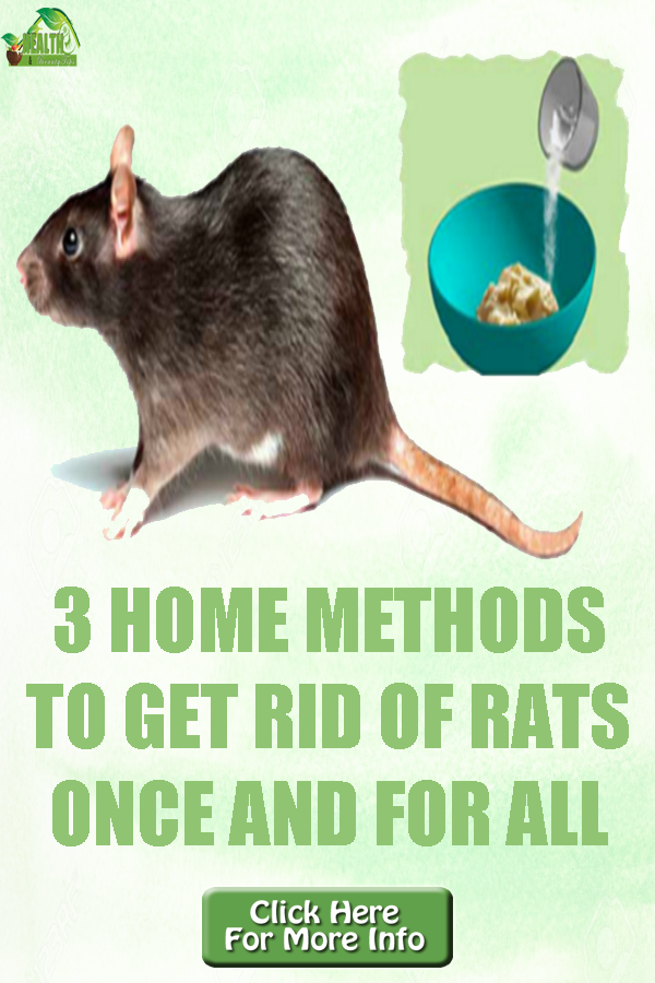 How To Get Rid Of Mice In A Restaurant