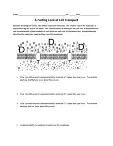 A Parting Look at Cell Transport Worksheet | Cell ...