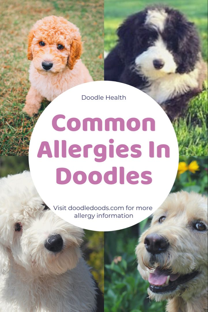 Common types of allergies in dogs symptoms and
