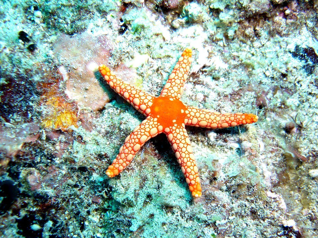31 best marine animals images on pinterest animals nature and