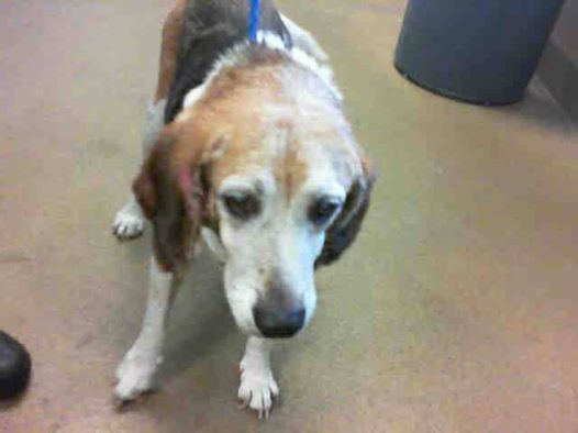 Nor Cal Senior Alert Sos Last Day Tue 7 23 3 Buddy