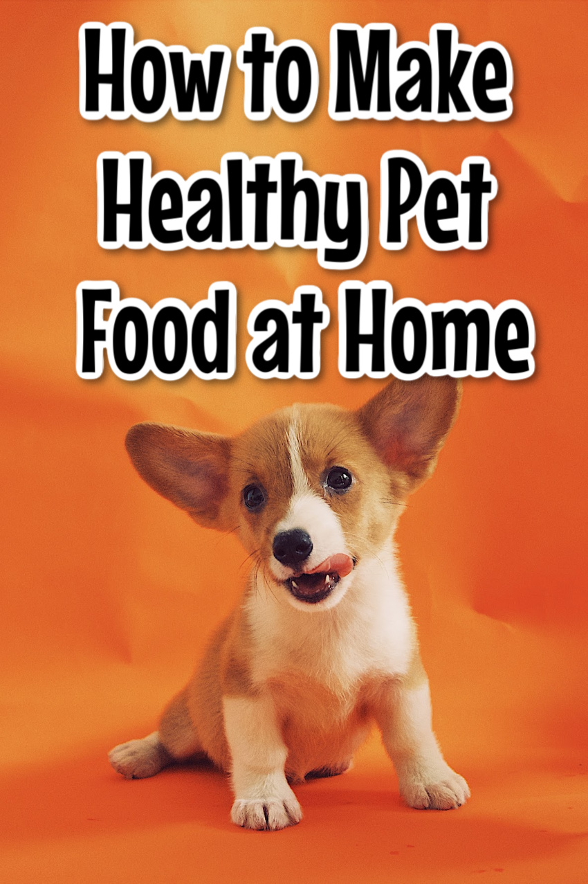 How To Make Healthy And Cheap Pet Food At Home In 2020 Cheap