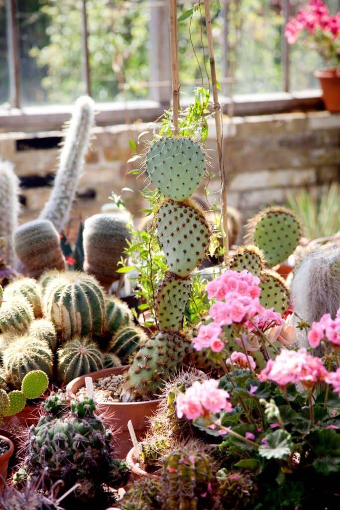 Cactus Garden Ideas cactus garden landscaping cactus garden ideas dawn and marco let us come see their cactus 34 Sharp Cactus Garden Ideas