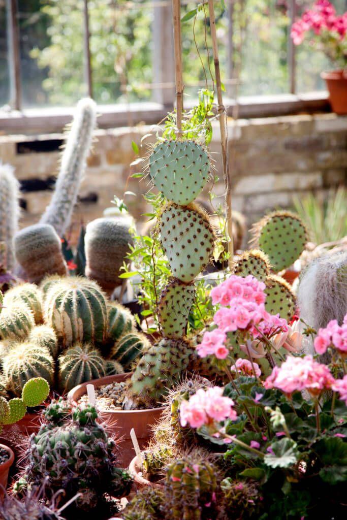 34 Sharp Cactus Garden Ideas Garden Inspiration Amazing 640 x 480