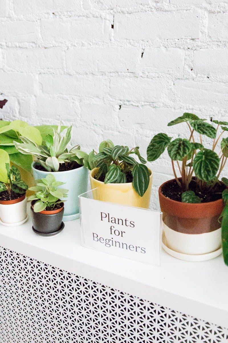 Style Your Home With Plants Plants House Plants Decor Plant Decor