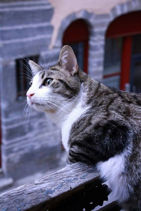 What Do You Mean With It S Too High Cats And Kittens Kittens Calico Cat Facts