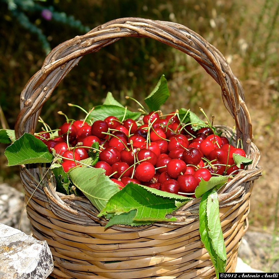 a cherry's basket (With images) Basket, Cherry, Sweet