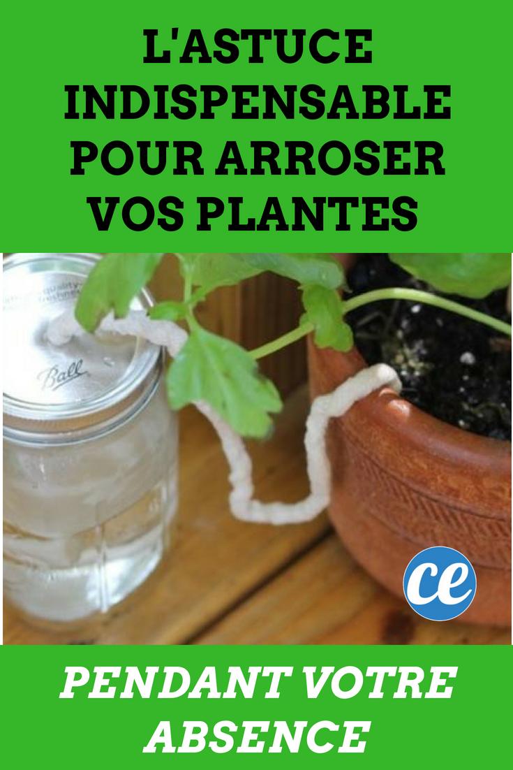 l'astuce indispensable pour arroser vos plantes pendant votre
