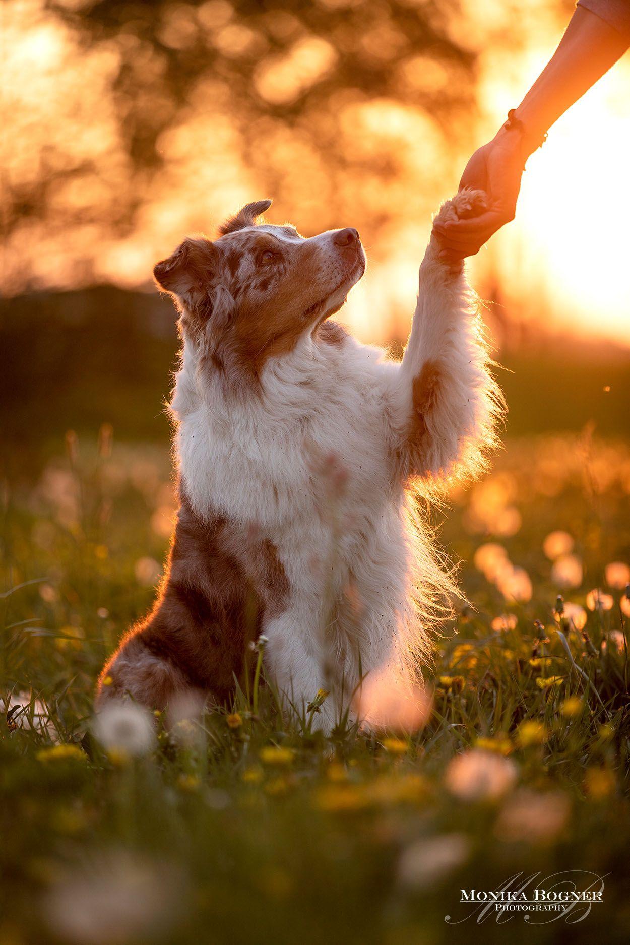 Cute Animals Bild Von Sophia Hundefotografie