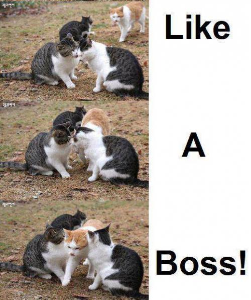 5db2f269bfa88f6788262943cb6c8074 i want to do this to any couple participating in pda lulz,Cat Boss Meme