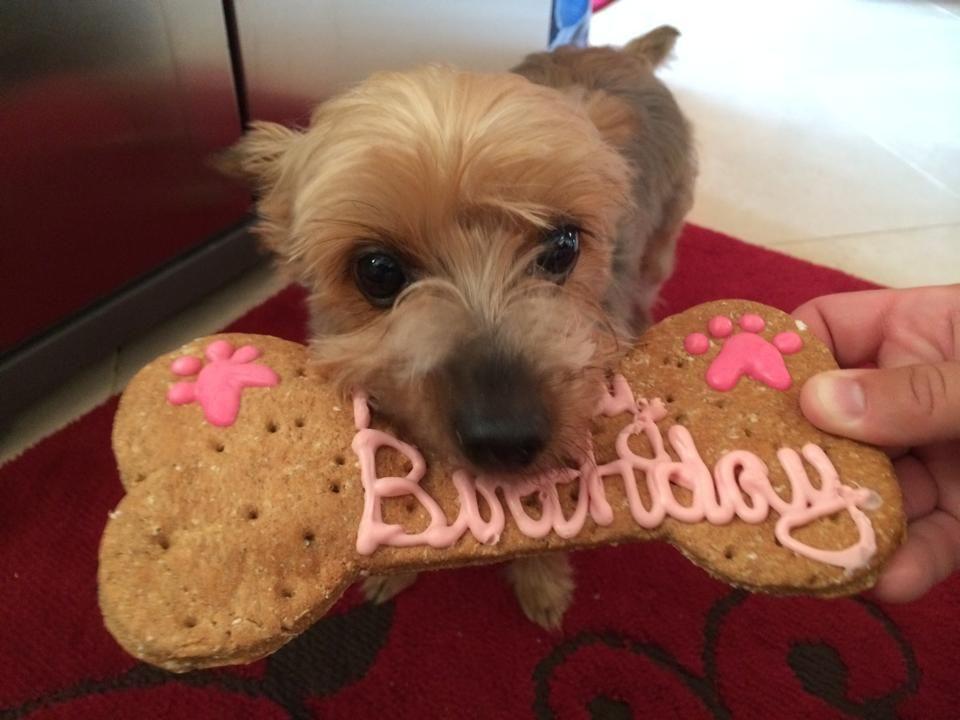 Has Your Pet S Coat Lost It S Shine Friend Birthday Pets Birthday