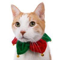 Pet Stocking Stuffers | PetSmart