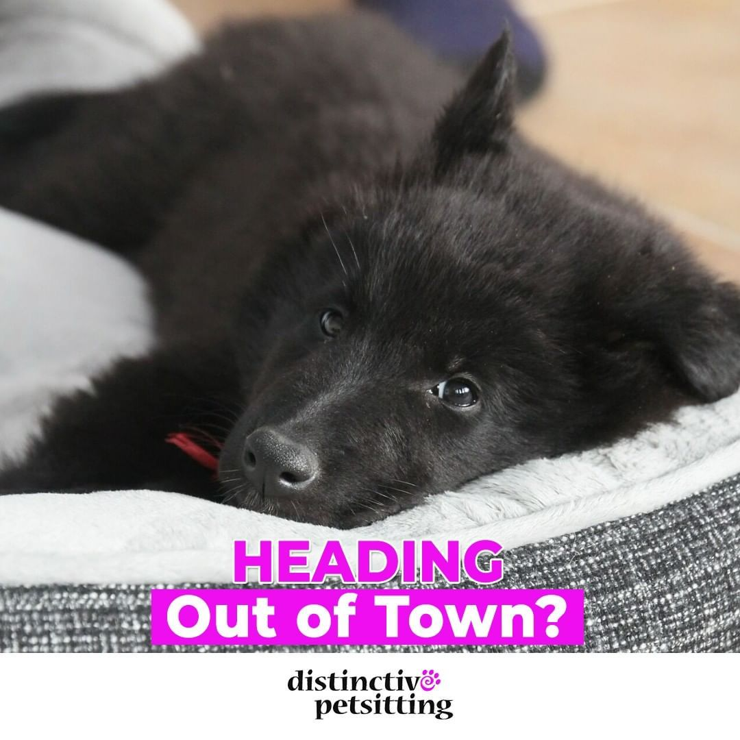how much to board a dog overnight