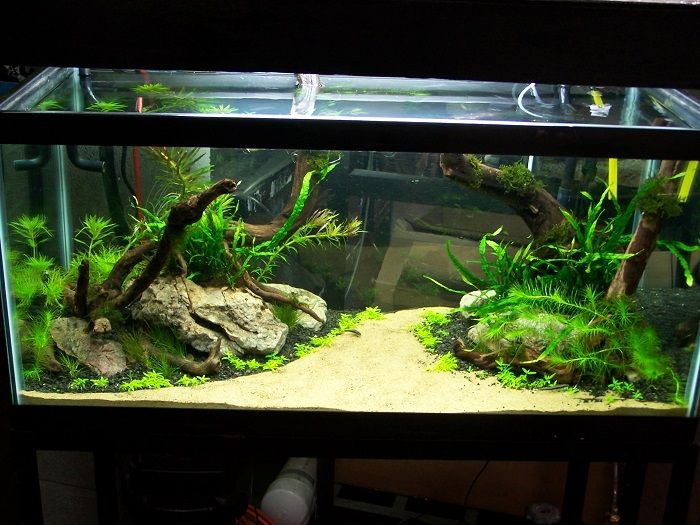 aquascaping designs as wonderful view for aquarium front