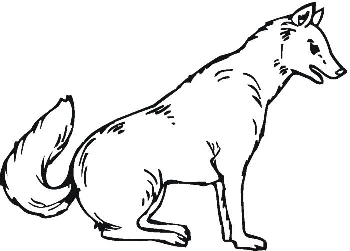 Wolf Coloring Pages Educacion
