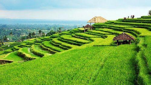 Travel to Jatiluwih rice terrace Bali Indonesia 2