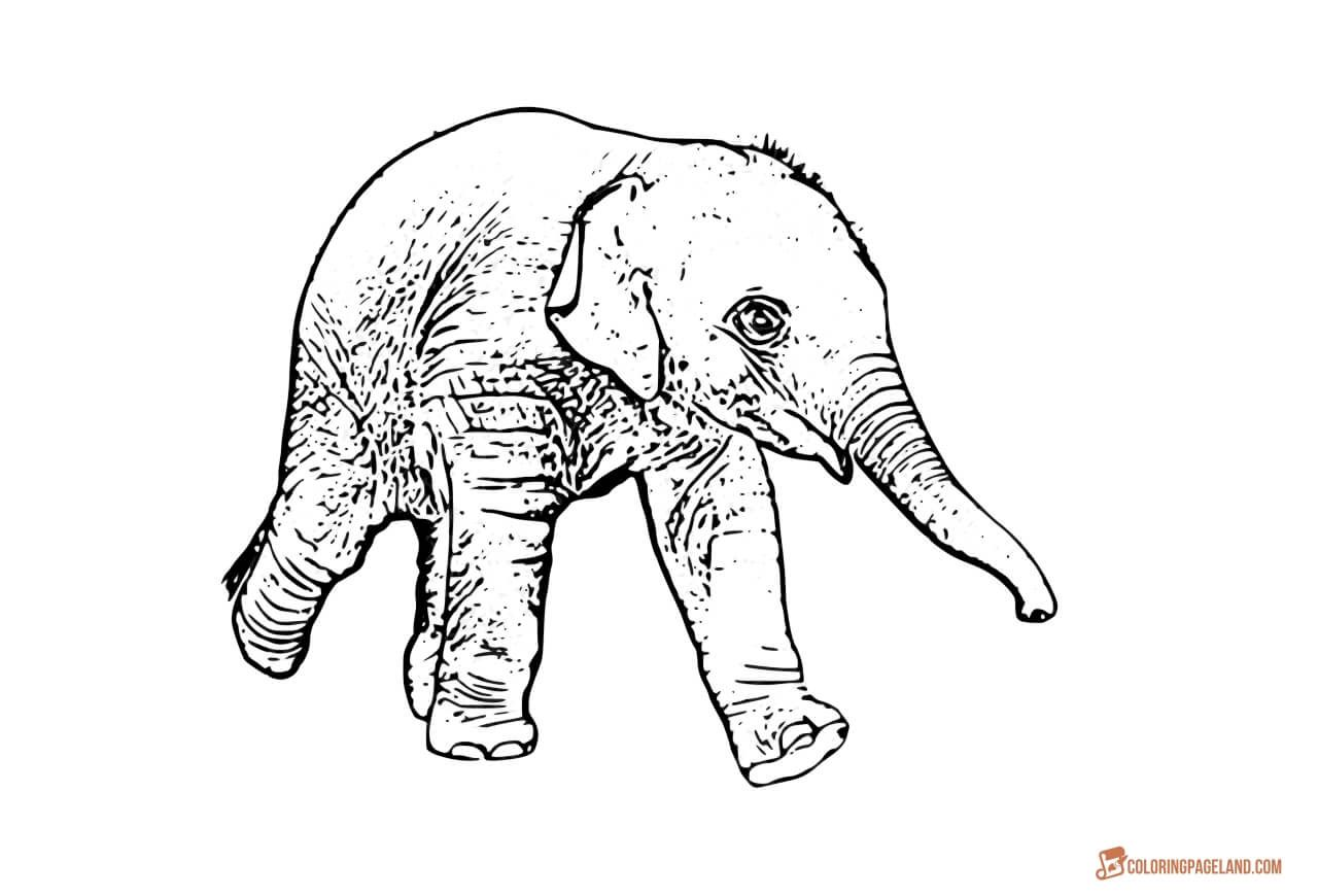 Coloring Pages of Elephants - Download and Print for Free | Baby ...