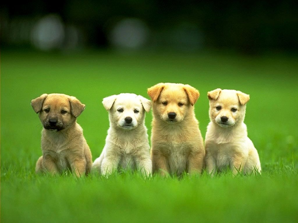 Yahoo Image Detail For Http Files Myopera Com I 20love 20animals Albums 1039 Puppies Puppy Training Puppy Pictures