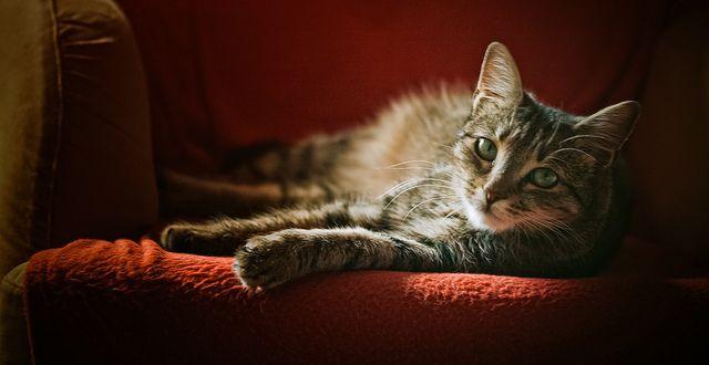The name of the cat: Mandula <3 | Flickr - Photo Sharing!