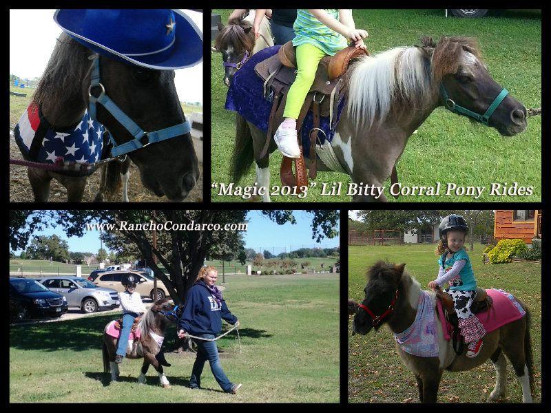 Magic man miniature horse