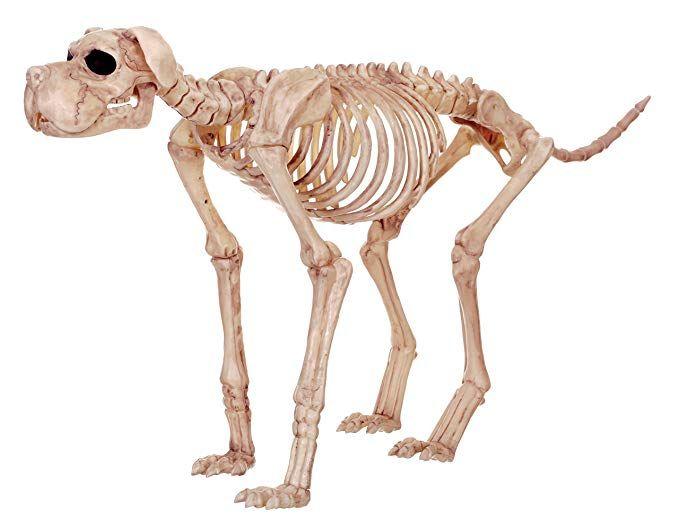 Crazy Bonez Skeleton Dog - Bruiser Bonez Review Novelty and Gag