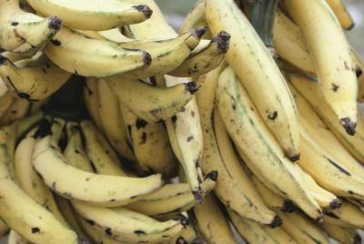 Do Overripe Bananas Still Have Nutritional Value?