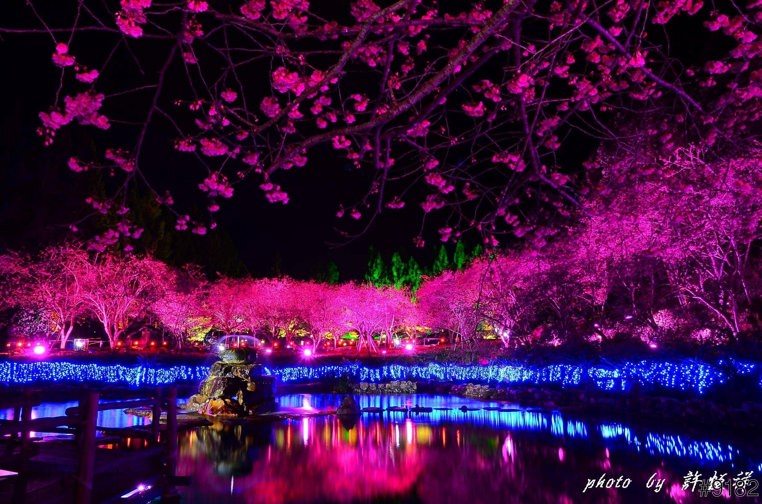 Cherry Blossom Lake Google Search Sakura Cherry Blossom Japanese Cherry Blossom Flower Garden Images