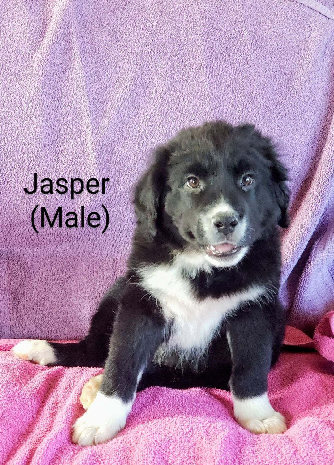Adopt Jasper On Petfinder Help Homeless Pets Pet Finder Pets Movie
