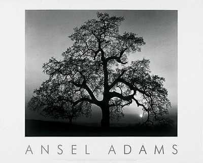 Oak Tree Sunset by Ansel Adams  24 x 30 inches  Fine Art Print  Poster -- See this great product.Note:It is affiliate link to Amazon.