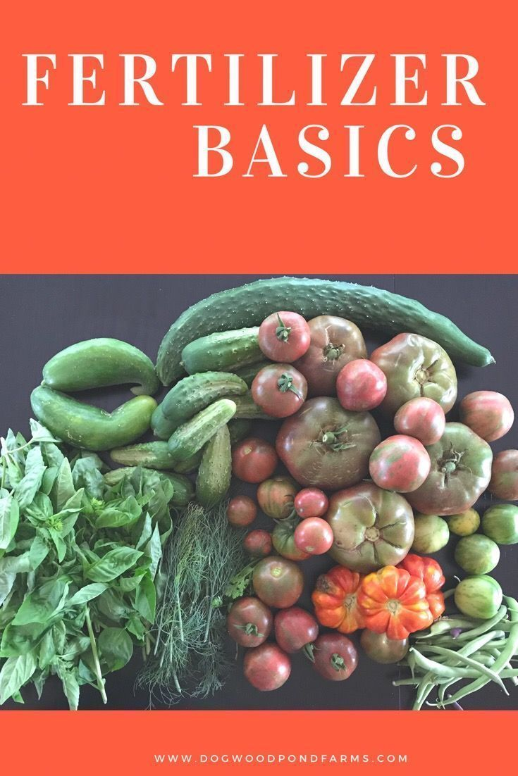 the Basics of Fertilizers for your Vegetable Garden What kind of fertilizer should I use? Whats in fertilizer? Organic or synthetic?  Start learning what you need to know to choose the right fertilizer for your garden!What kind of fertilizer should I use? Whats in fertilizer? Organic or synthetic?  Start learning what you need to know to choo...