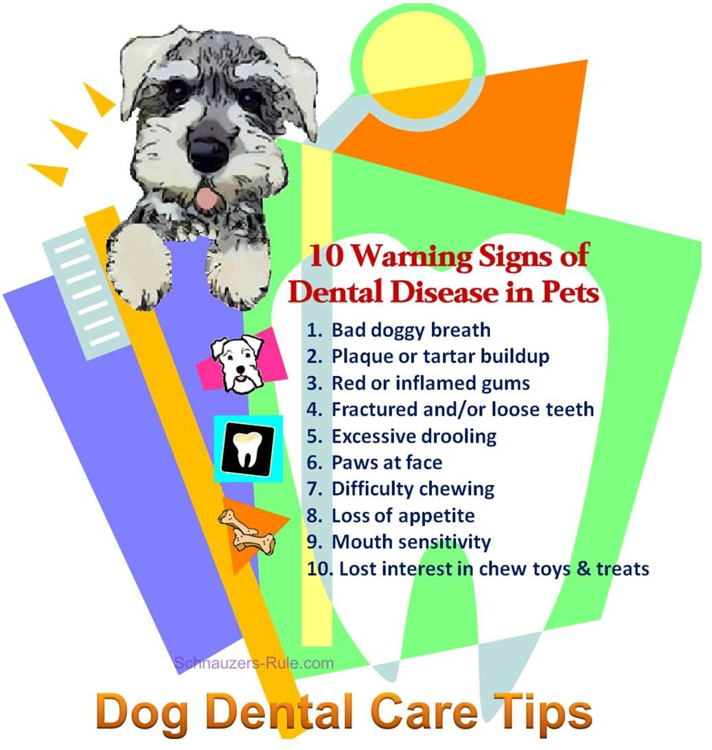 Dog Teeth Diagram & Mouth Problems Dog dental, Dog