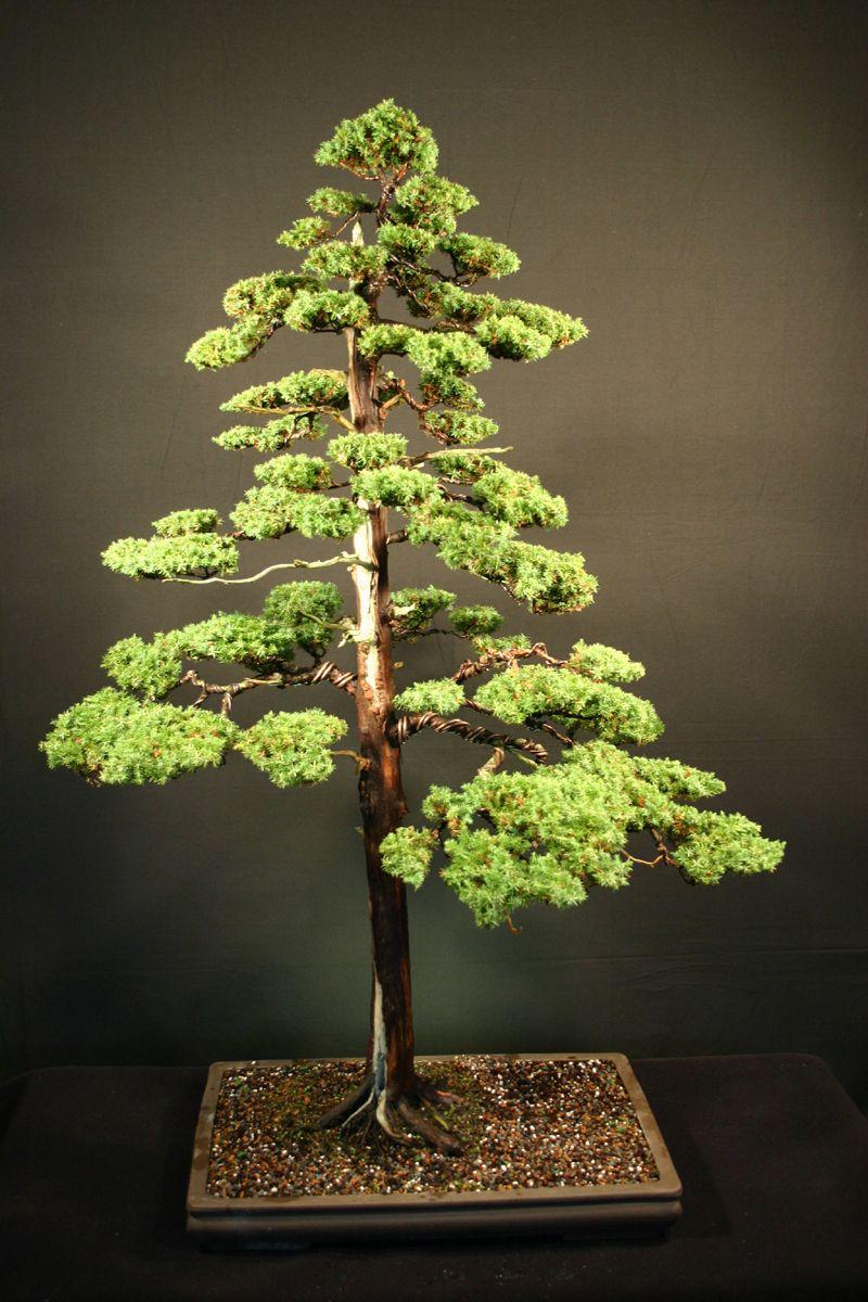 Artist: Ed Trout Dwarf Japanese Juniper (Juniperus ...