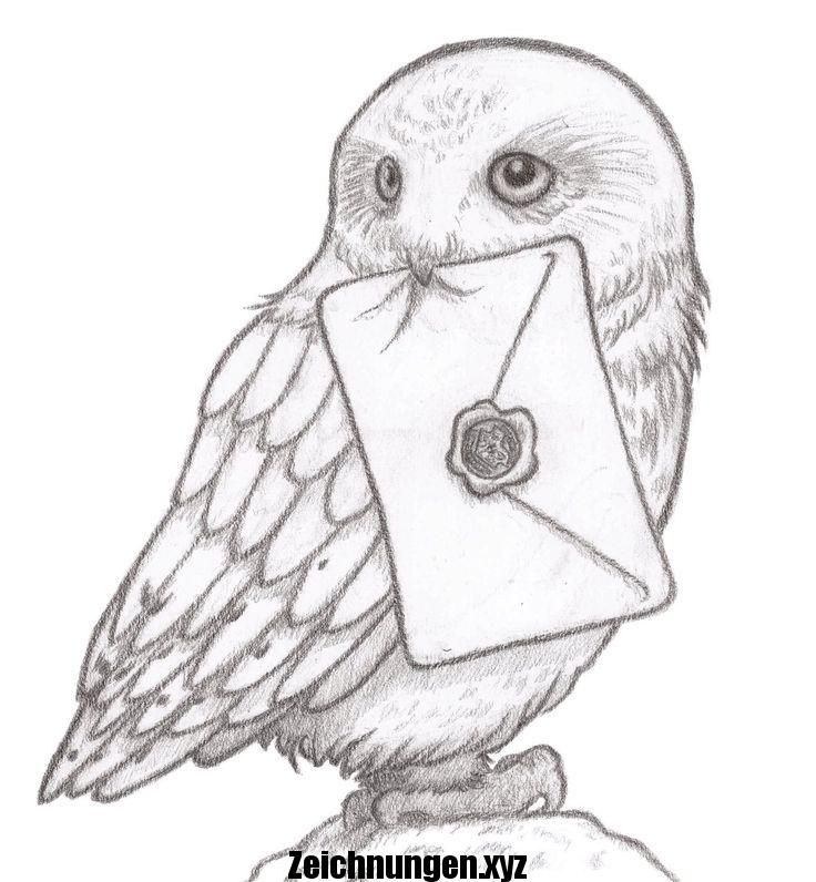 41 Kidlitart Hashtag Auf Twitter Alex Worthen Alworthen 20 Januar Hedwig Skizze An Harry Potter Art Drawings Harry Potter Sketch Harry Potter Drawings