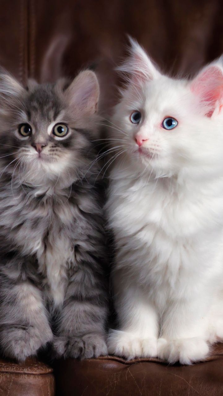 720x1280 Wallpaper kittens, cats, fluffy, colorful, cute