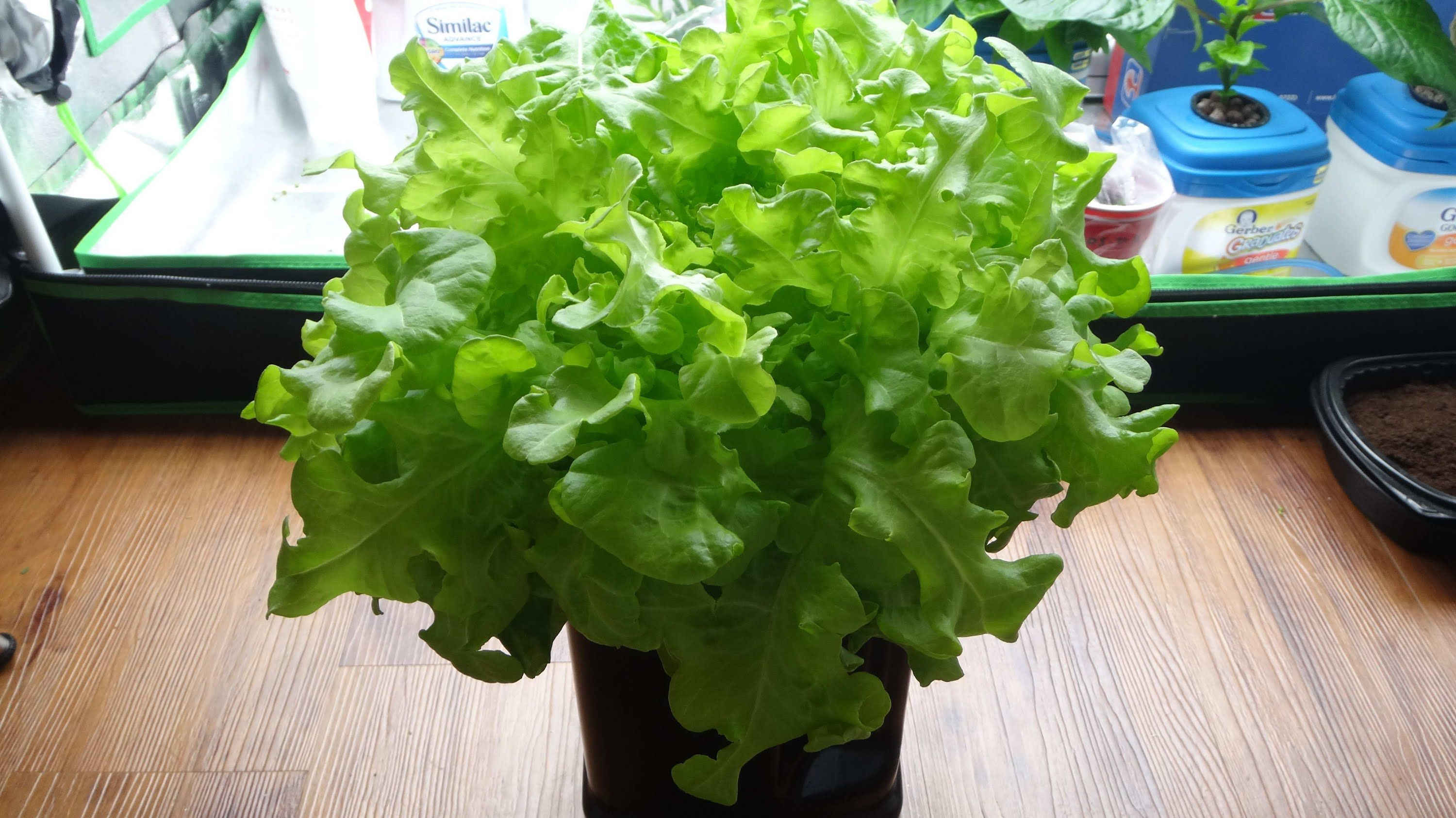 How To Make A Mini Kratky Hydroponic System For Lettuce