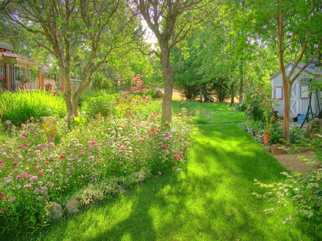 field+of+flowers+in+back+yard | my dads backyard grass ...