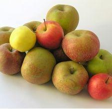 DIY bitter apple spray for dog training. Apple cider vinegar recipe and lemon juice recipe.