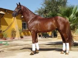 Resultado de imagen para caballos de tiro belgas
